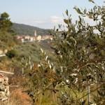 Villa Faraldi sett fra åsen